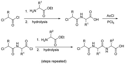 Fischer Peptide Synthesis