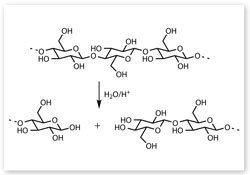 Acid catalysed hydrolysis of cellulose chains
