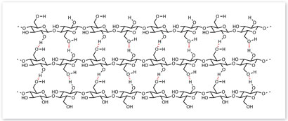 Hydrogen bonding in cellulose