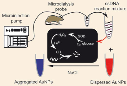 glucose oxidase  test