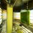 Growing algae for biofuels