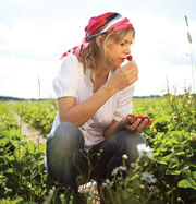 Woman picking stawberries