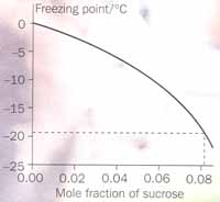 Fig 2  The freezing point of sucrose solutions as a function of sucrose