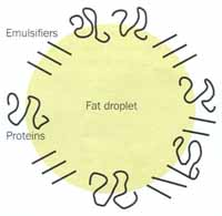 Fig 3(b)  Schematic diagram of homogenisation showing proteins and emulsifiers adsorbed to the small fat droplets