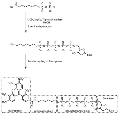 Synthesis of fluorophore-labelled DNA base (Ref 2)