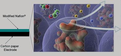 Glycerol guzzling enzymes