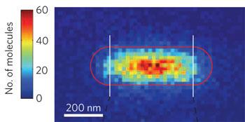 Reactivity map of a single gold nanorod
