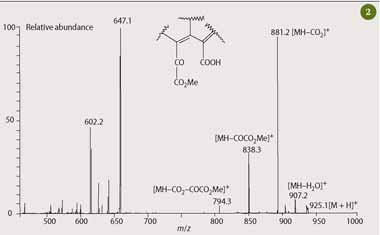 Fig 2  Mass spectrum of Mg-purpurin-7 monomethyl ester, 2(f), showing the identity of the main fragment ions