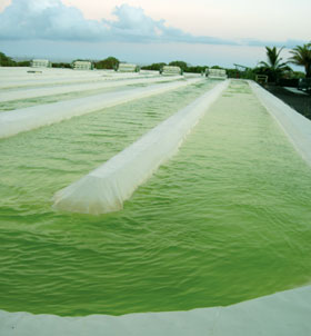 Algae ponds in Kona, Hawaii