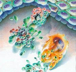 http://www.rsc.org/images/apoptosis-250_tcm18-49828.jpg