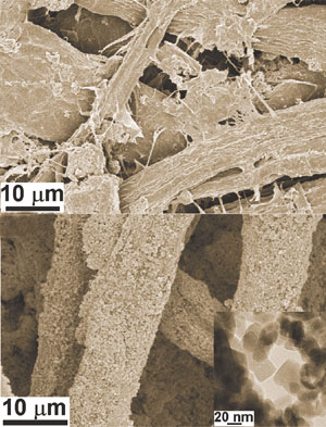 Paper fibres (top) and coated with zinc oxide nanoparticles (bottom); insert showing nanoparticles