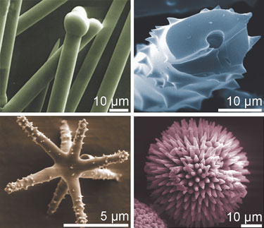 Sponges use silica to make an array of nanostructures