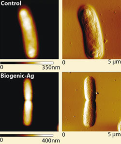 Toxic effects of biogen-Ag nanoparticles
