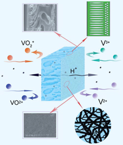 Schematic drawing of membrane in action