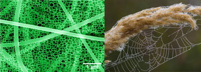Spider web and sticky nanofibre net structure