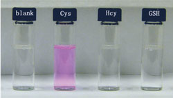 Row of sample vials with a blank control (clear and colourless), cysteine (pink), homocysteine (clear and colourless) and glutathione (clear and colourless)