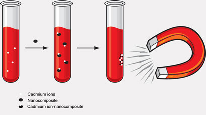 Removal of cadmium ions from a human blood sample with a magnet