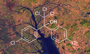 Dicofol, a close relative of DDT, has been found in the Pearl River Delta