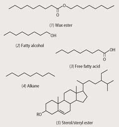 Diagram Of The Chemical Structure Of Wax_7a5xRMkEMxHoUCCYfB1sPN%7CWP2np5fRWAUXoYXdL0LwtWNquKqqccX*YHtbXmbJvCfVPJjzTEALgjRHhyvG5iQ