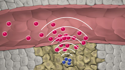 Talking nanoparticles kill tumours