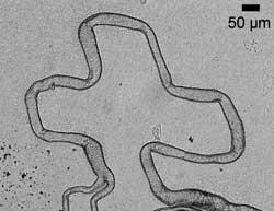 Microtube cross
