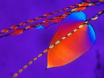 curving crystals
