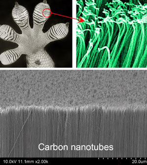 Top: Gecko's foot and setae; Bottom: Carbon nanotube glue