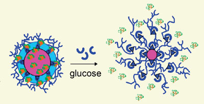 Glucose-responsive nanoparticles deliver insulin