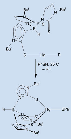 Hg-C bond cleavage