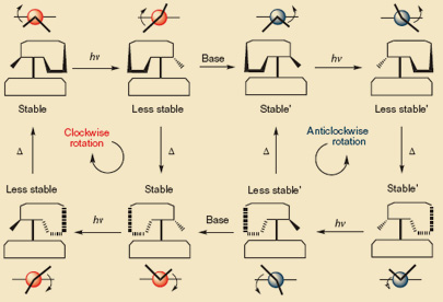 Changing direction of rotation in molecular motors