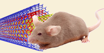 Testing nanotube toxicity on mice