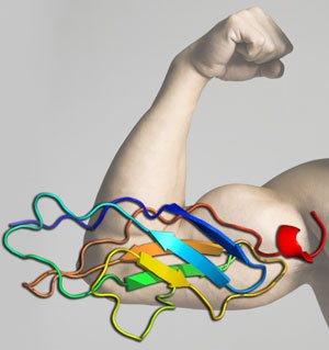 Biomaterial mimics the titin protein in human muscle