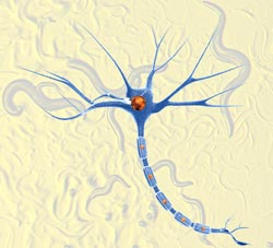 Neurone research using nematodes