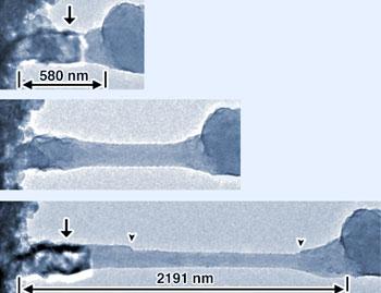 Salt nanowires