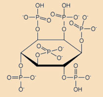 Phytic acid