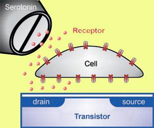 Transistor biosensor