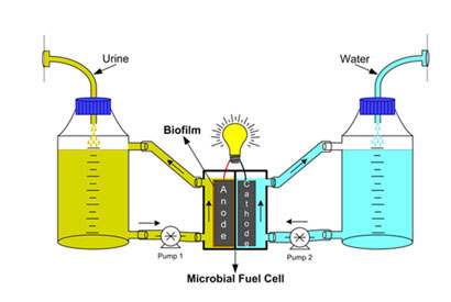 Urine fuel cell